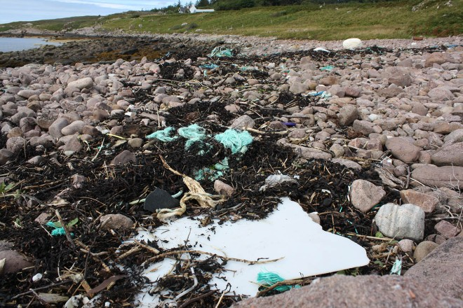 Achduart litter in seaweed