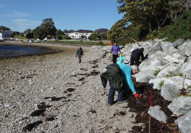 working together along the strandline