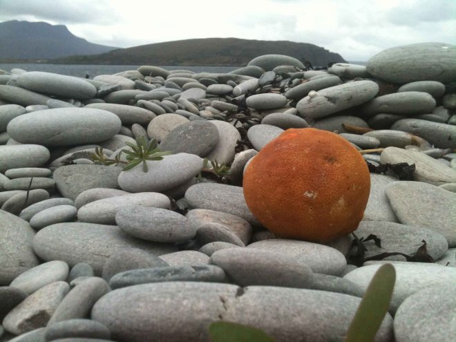 could it be a Littoral Orange
