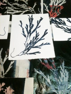 west coast seaweed prints