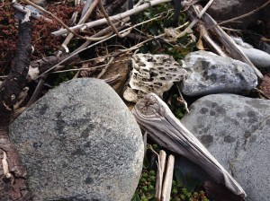 plastic rock disguise copy