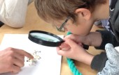magnifying-voxter