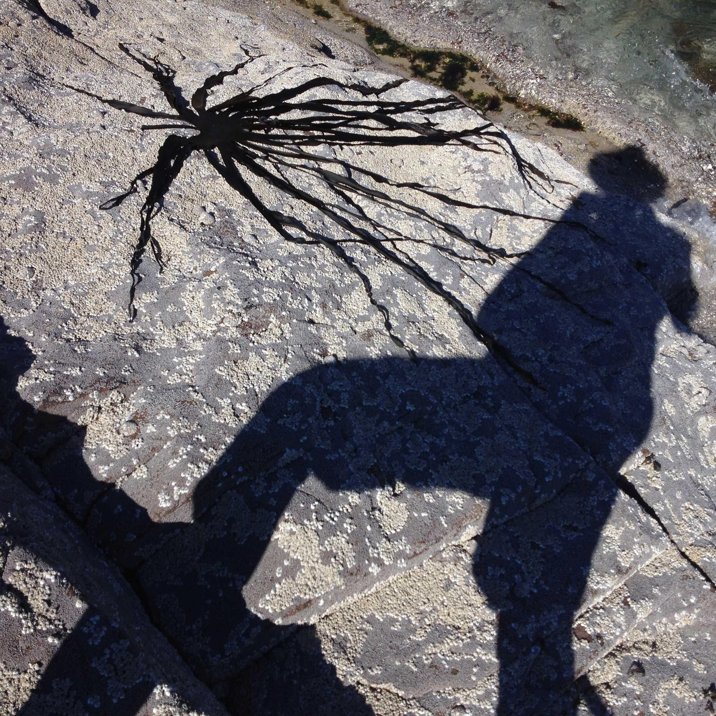 photographing kelp 2